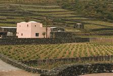 41-donnafugata_cantina-di-pantelleria_ph-scafidi_lowthumb