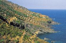 46-pantelleria_terrazzamenti-vitati_ph-frigerio_lowthumb